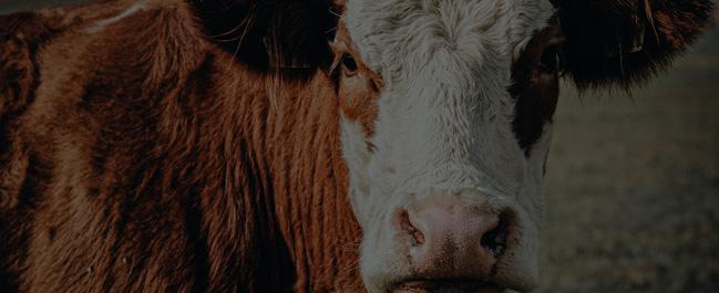 Diplomado en Derecho Animal